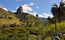 La Gomera słynie z wawrzynoiwych lasów, w których znaleźć można endemiczne gatunki paproci