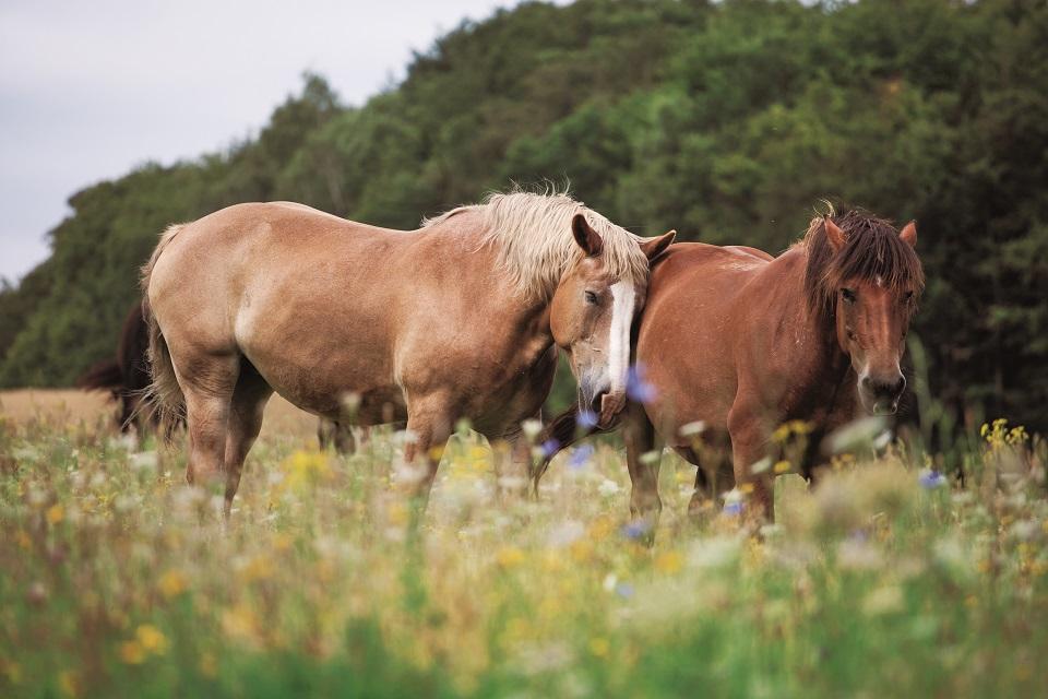 Konie. Pojezierze Drawskie